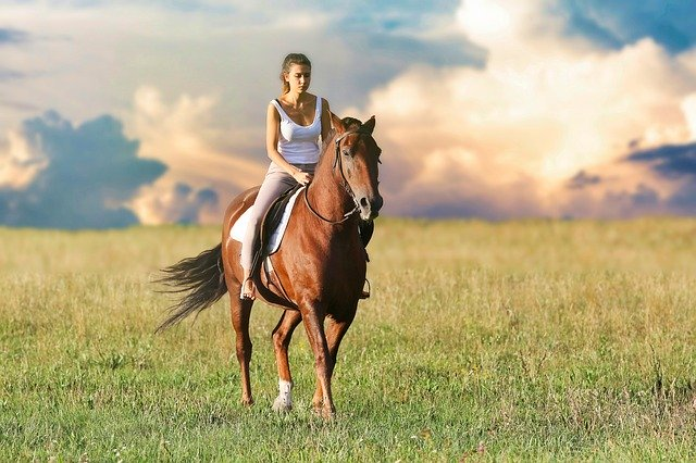 3 Reasons To Desensitize Your Horse